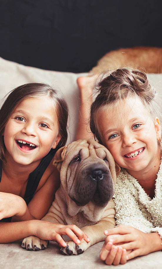 arthrose-maladie-chien-lexmoor